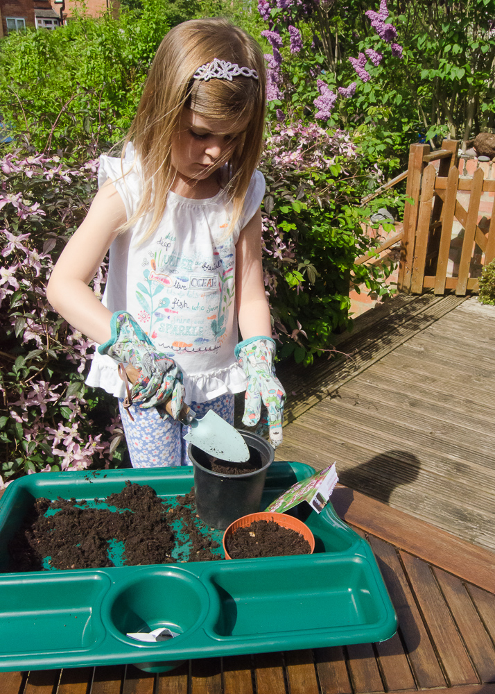 making a garden attractive to butterflies by sowing wild marjoram
