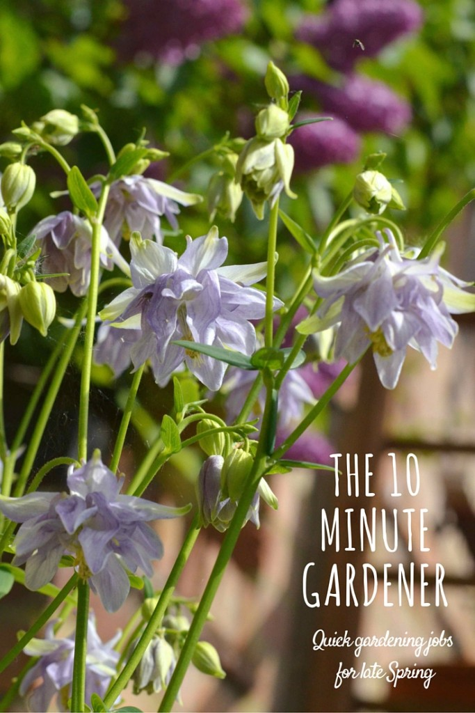 ten minute gardening jobs for late spring