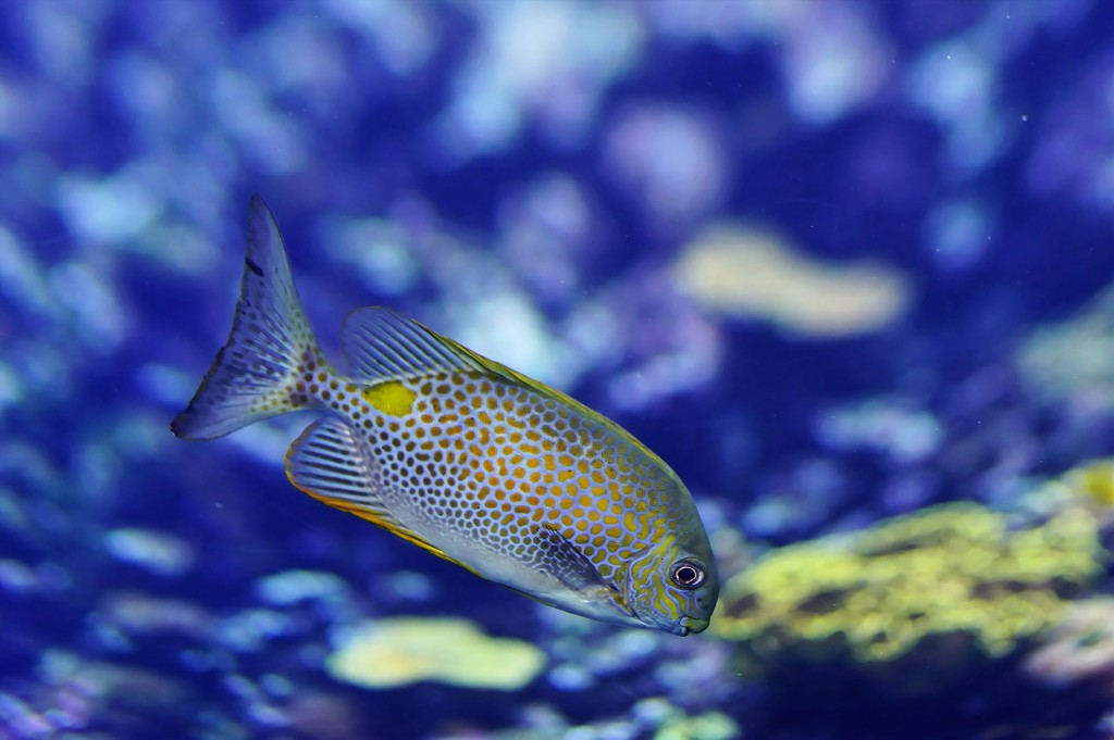 sealife centres are great for family days out