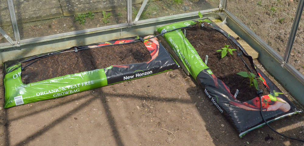 Click & Drip growbags