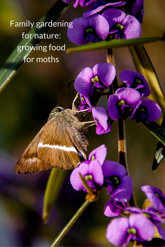 family gardening for nature - growing food for moths
