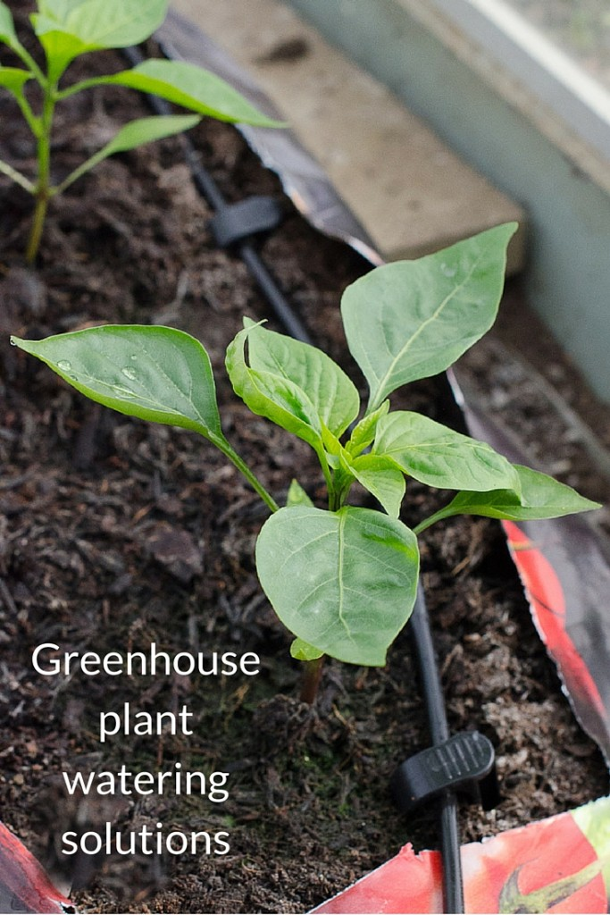 greenhouse plant watering solutions