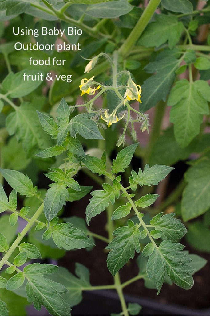 using baby bio outdoor plant food for fruit and vegetables
