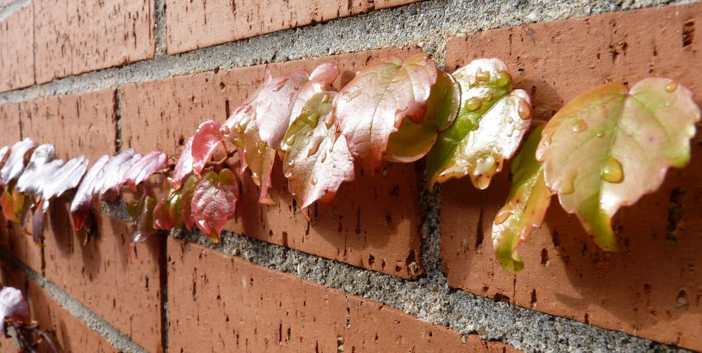 brick walls are a low maintenance option for a family garden