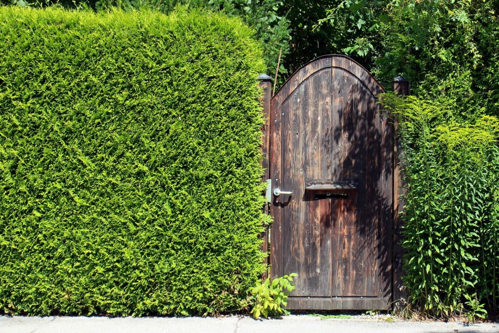 if you want to create privacy in a family garden hedging is an option