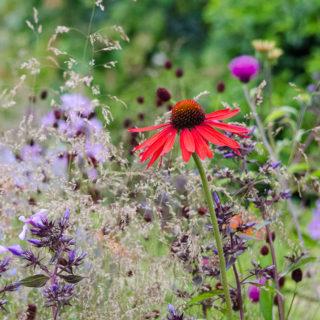 hampton court flower show 2016 zoflora outstanding natural beauty show garden