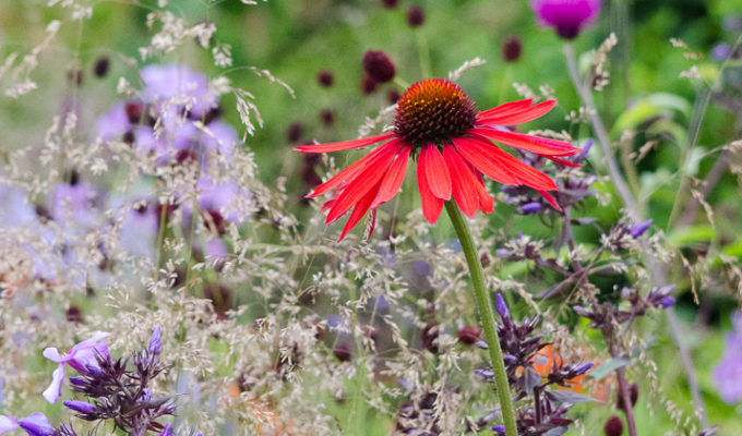7. The 10 minute gardener: quick summer gardening jobs