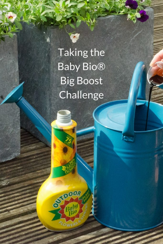 taking the baby bio big boost challenge with baby bio outdoor plant food for flowers and shrubs