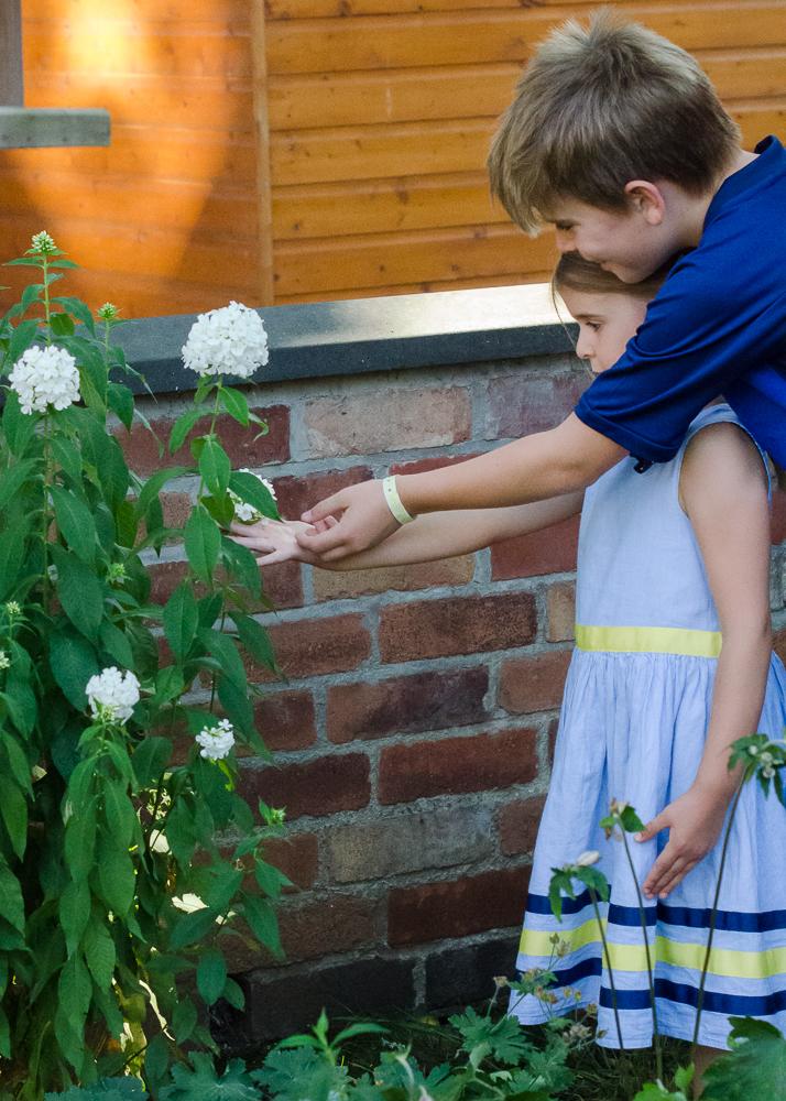 nature craft - choosing flowers to press