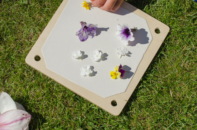 Nature craft: flower pressing