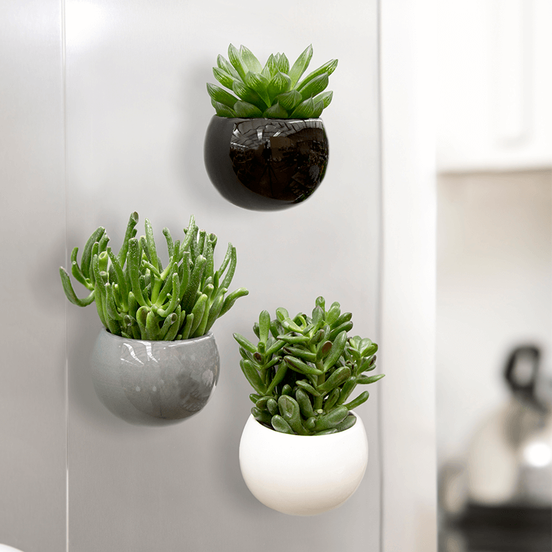 magnetic succulent trio online plant gift from blossoming gifts