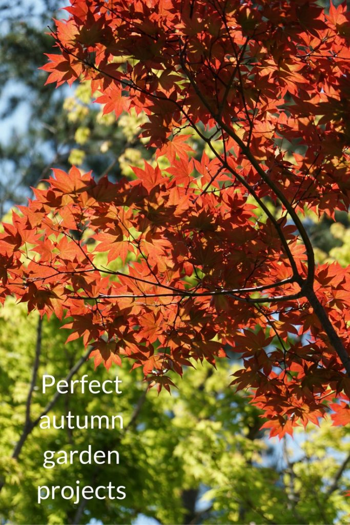 perfect autumn garden projects