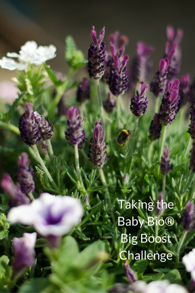 Taking the Baby Bio® Big Boost Challenge #5