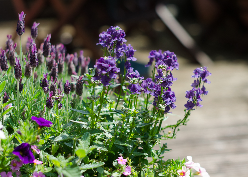 gardening in may - looking after container plants