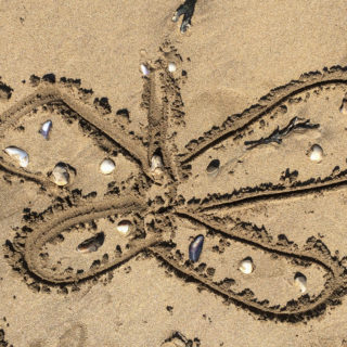 butterfly beach craft with natural materials
