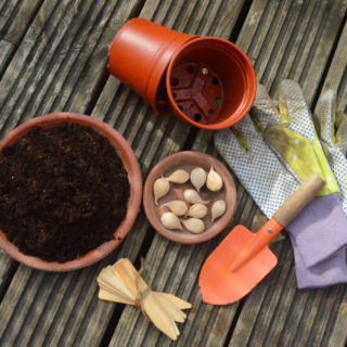 kit required to force spring bulbs to flower early