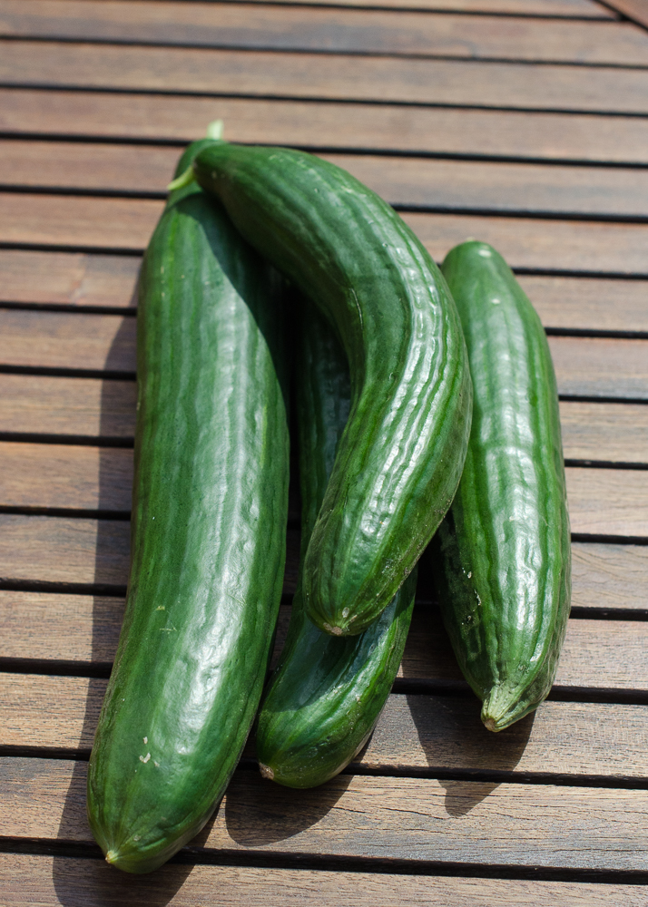 grow-your-own photographic diary cucumber harvest