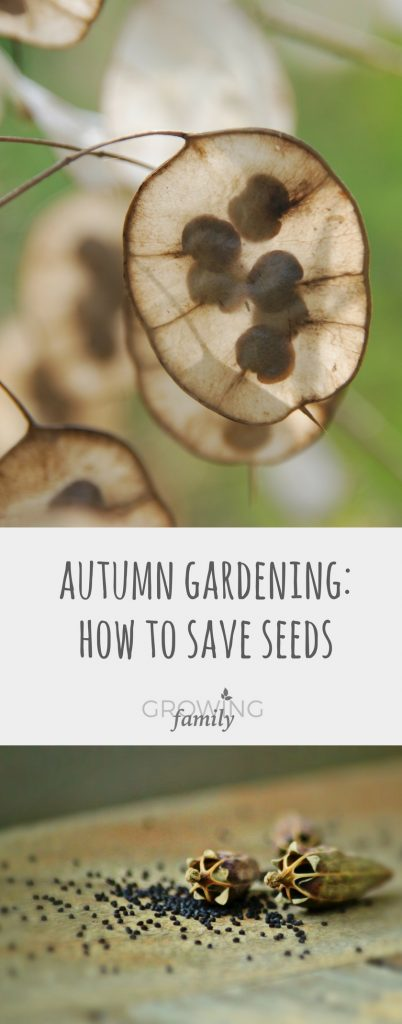 Harvesting seeds in autumn is a great way to get lots of new plants for free, and it's easier than you think! Check out these tips and instructions on how to do it.