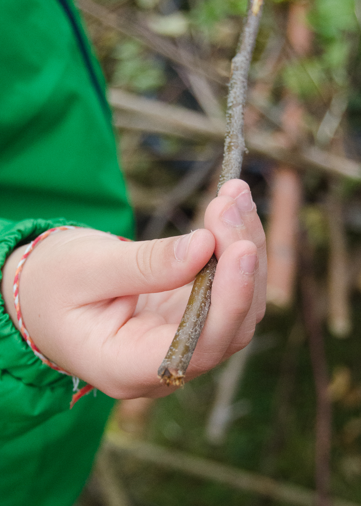 how to make twig whistles - choosing a twig