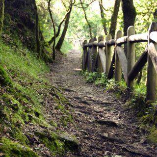 nature walk small