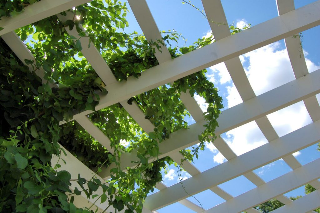 patio privacy - living screen of climbing plants