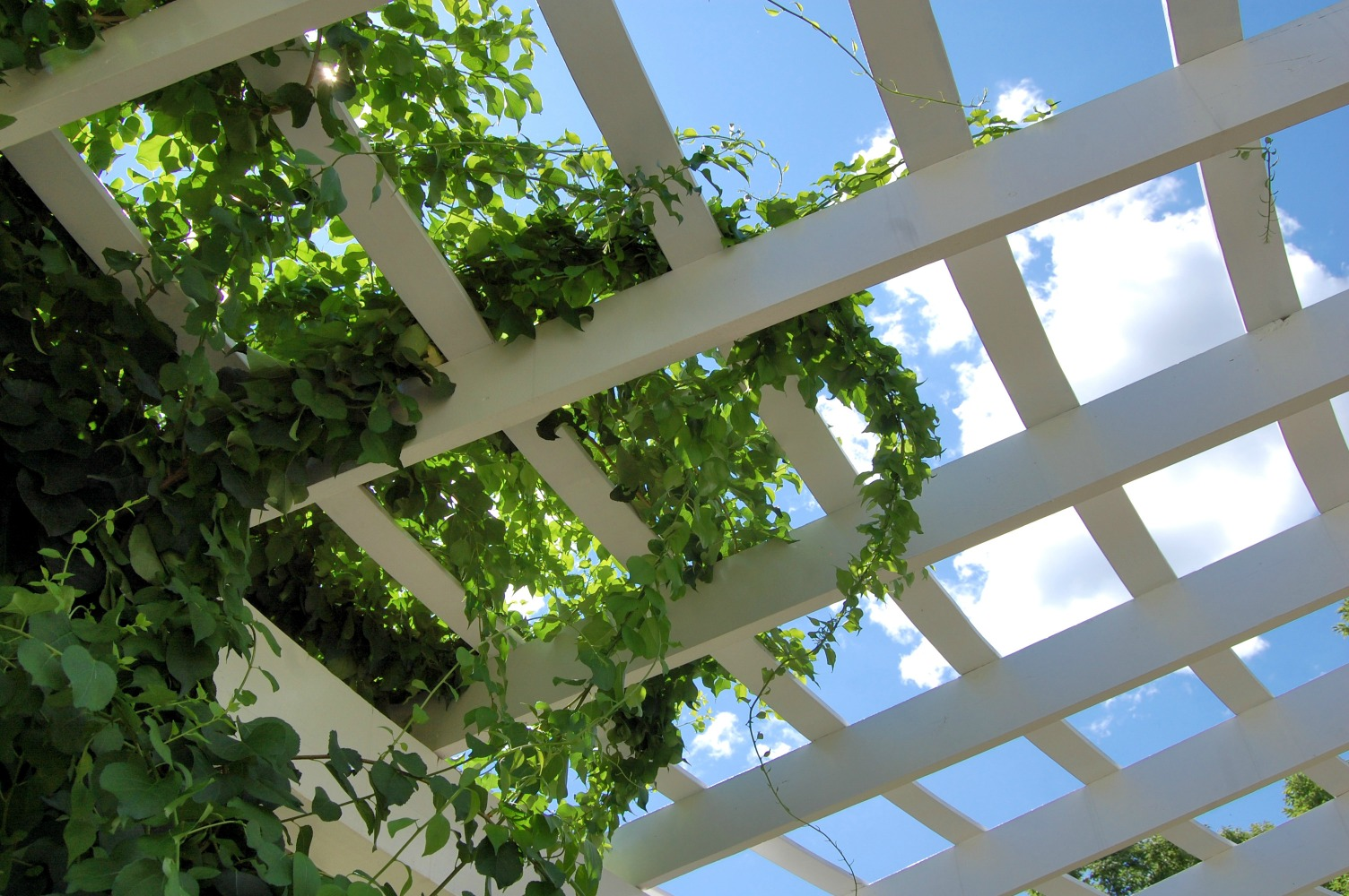 How to make the most of your patio space growing family for Fast growing climbing plants for screening