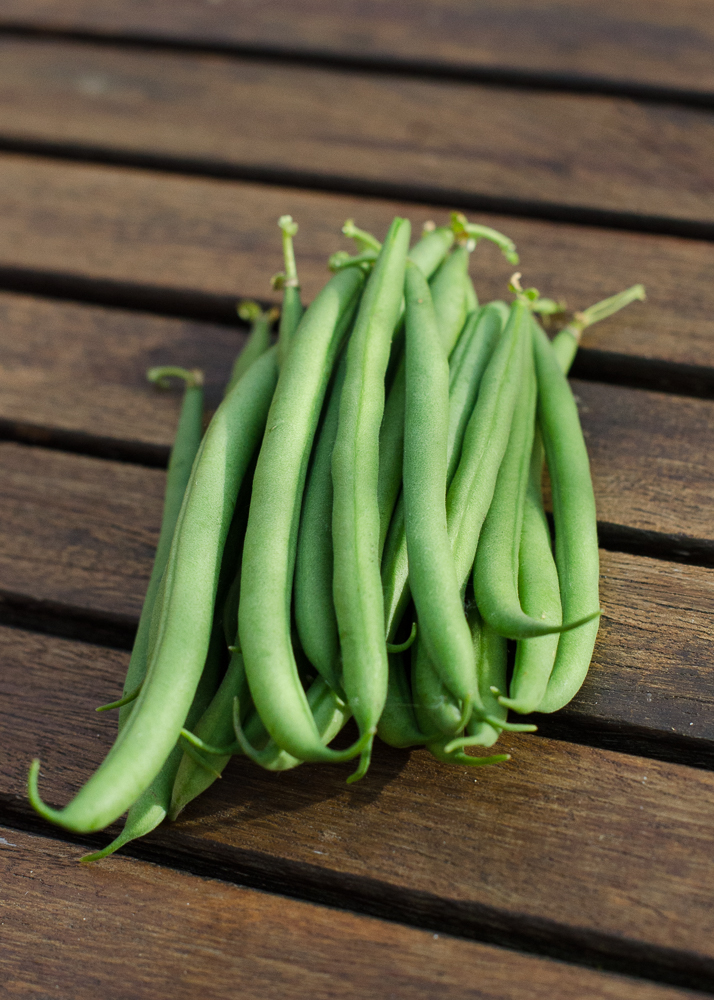 grow-your-own photographic diary tomatoes dwarf french beans
