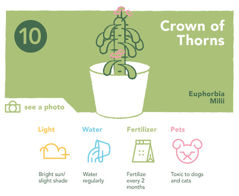 ten best succulents for your home