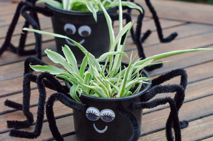 spooky spider plants nature craft