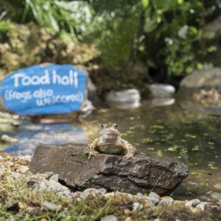 garden toad rspb images eleanor bentall