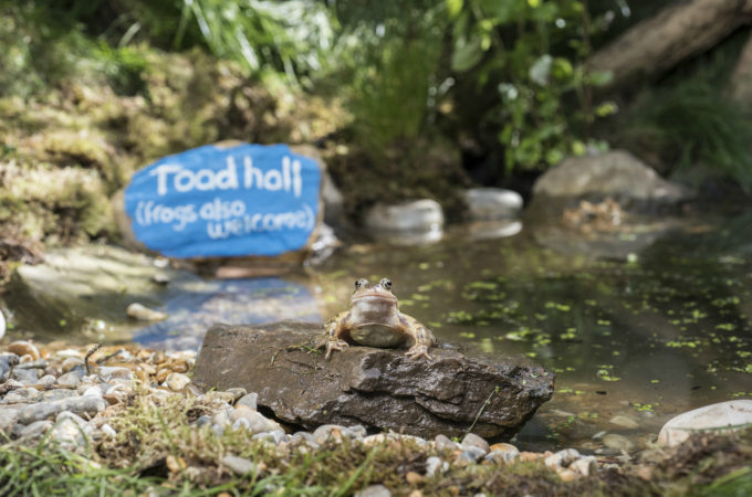 Giving nature a home in our garden: making a frog and toad abode