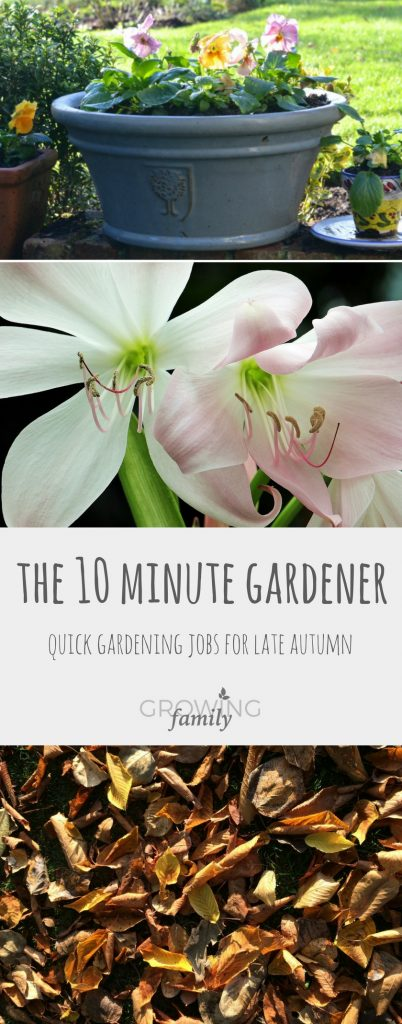Late autumn gardening jobs with the ten minute gardener: prepare your garden for the cold weather and the spring that follows it with these quick jobs.