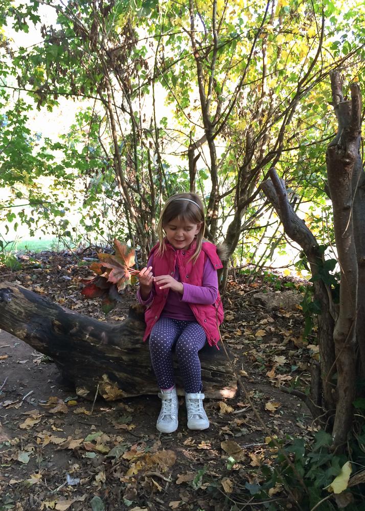 woodland leaf hunt