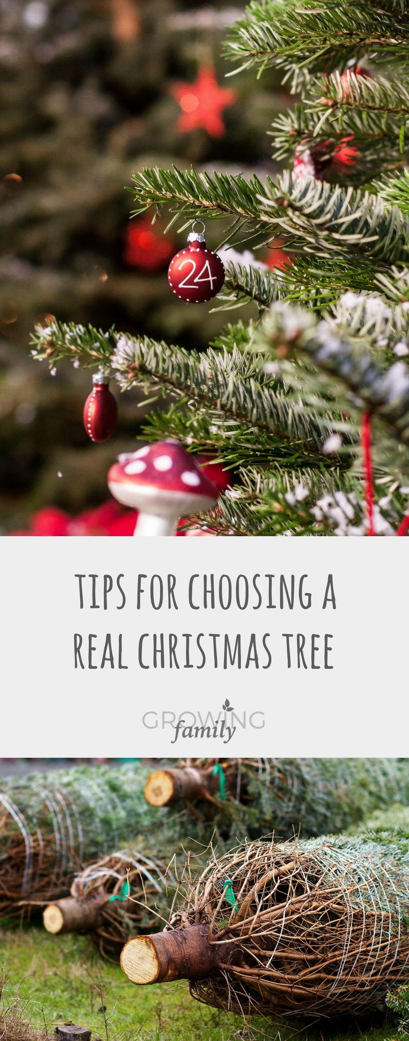 Tips for choosing a real Christmas tree - Growing Family