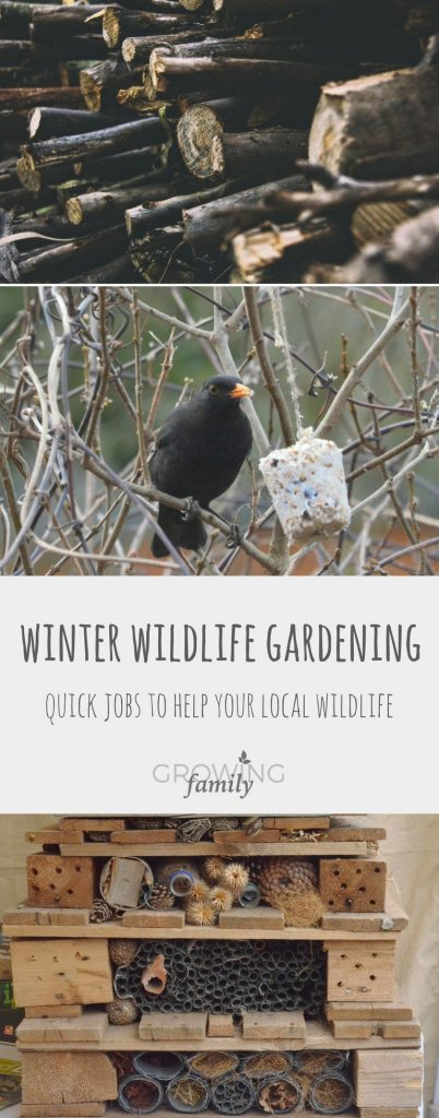 Wildlife gardening jobs for winter with the 10 minute gardener: ideas for quick gardening tasks that will really give local wildlife a helping hand.