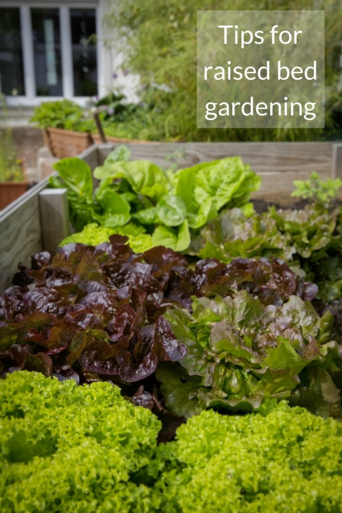 Looking for inspiration on spring garden projects? This feature exploring the world of raised bed gardening is a great place to start!