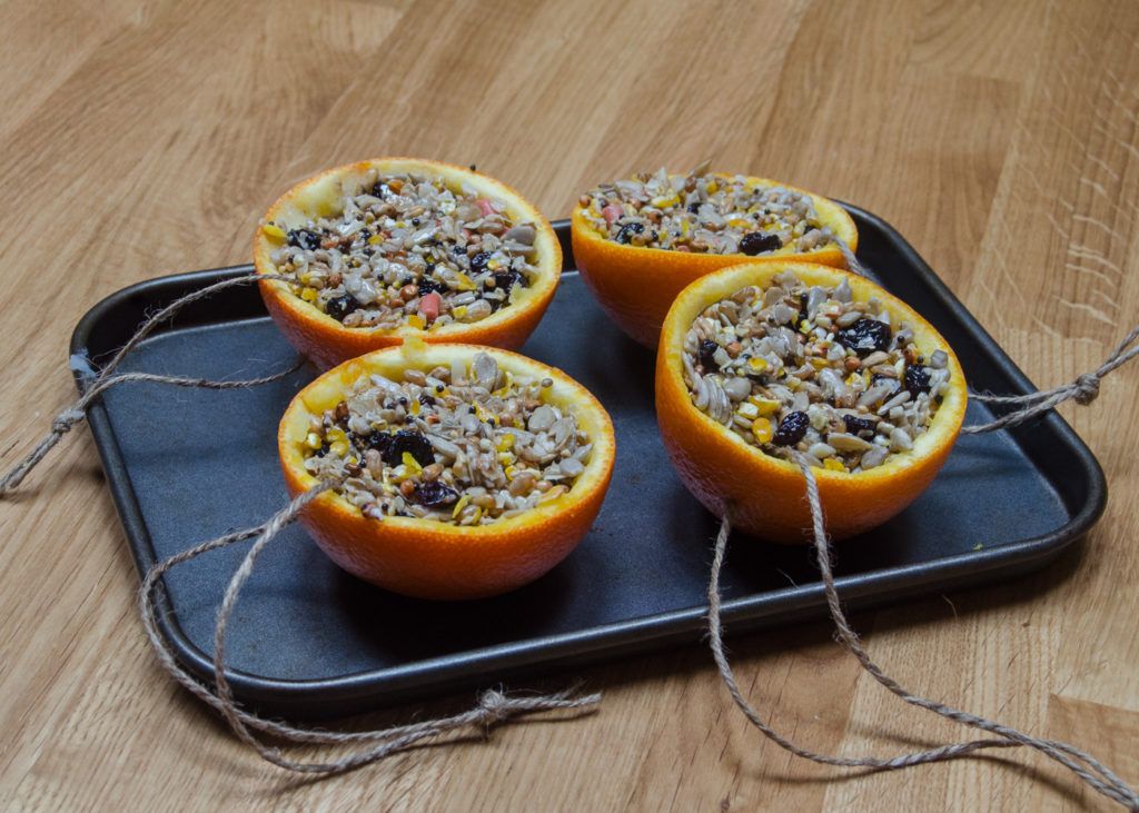 orange halves filled with bird feed mix