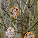 How to make your own homemade bird feeders - a simple and fun nature activity for children which will encourage wild birds to visit your garden!