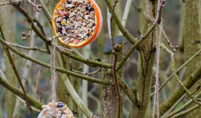 How to make fun bird feeders