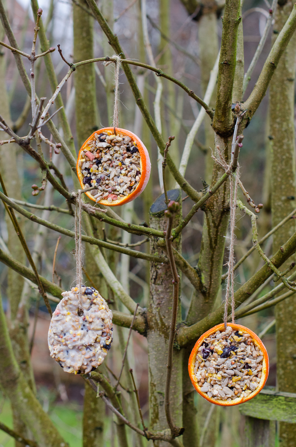 How to make fun bird feeders - Growing Family