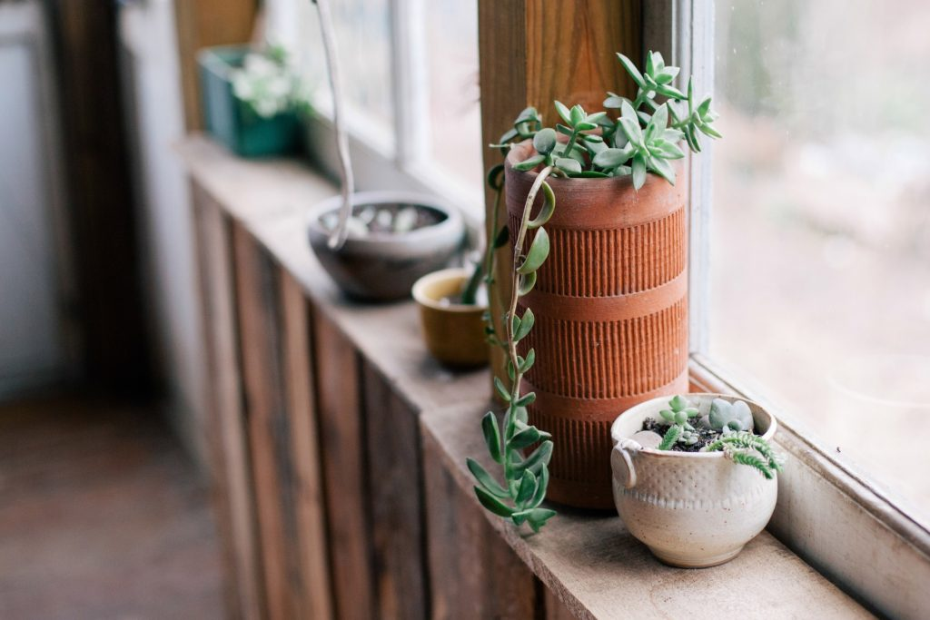 plant pots on windowsill in garden room