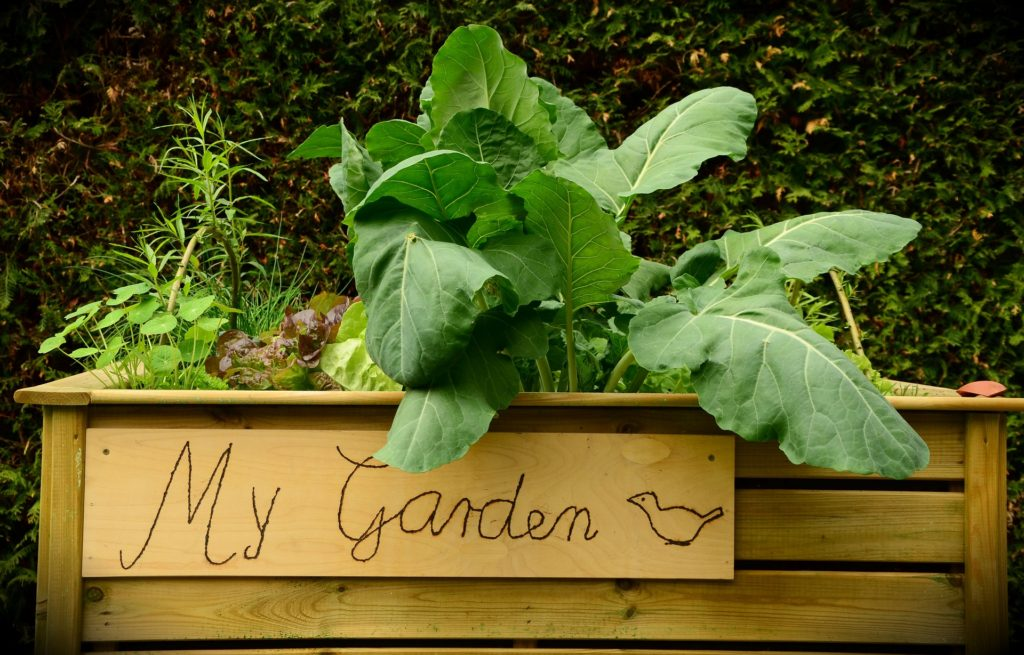 grow your own tips - raised bed vegetable gardening