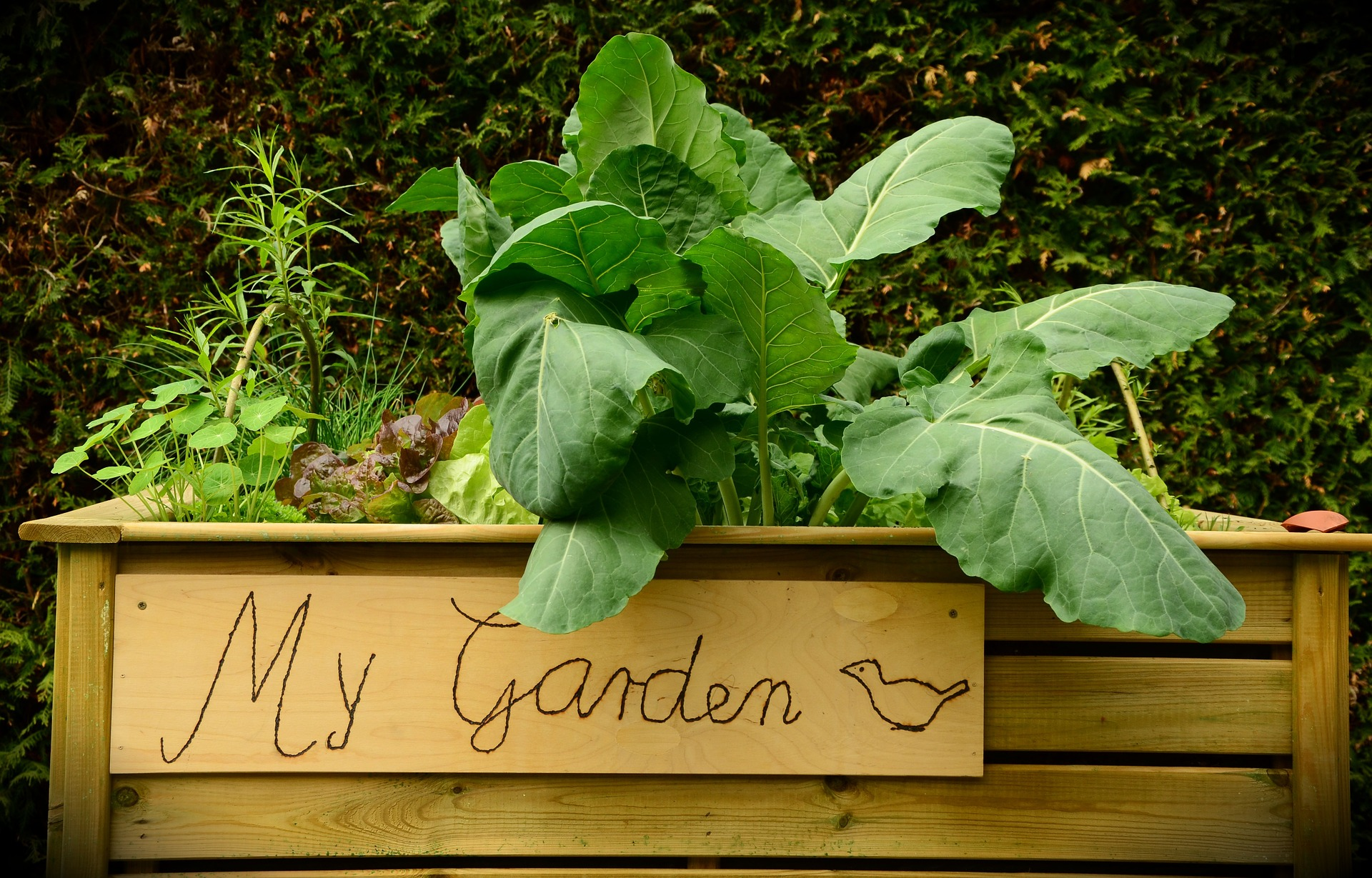 Tips for installing a raised bed this spring - Growing Family