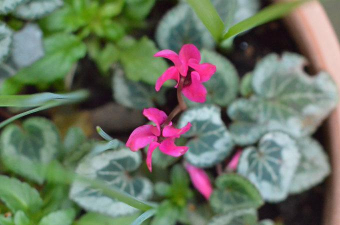 4. The 10 minute gardener: spring planning
