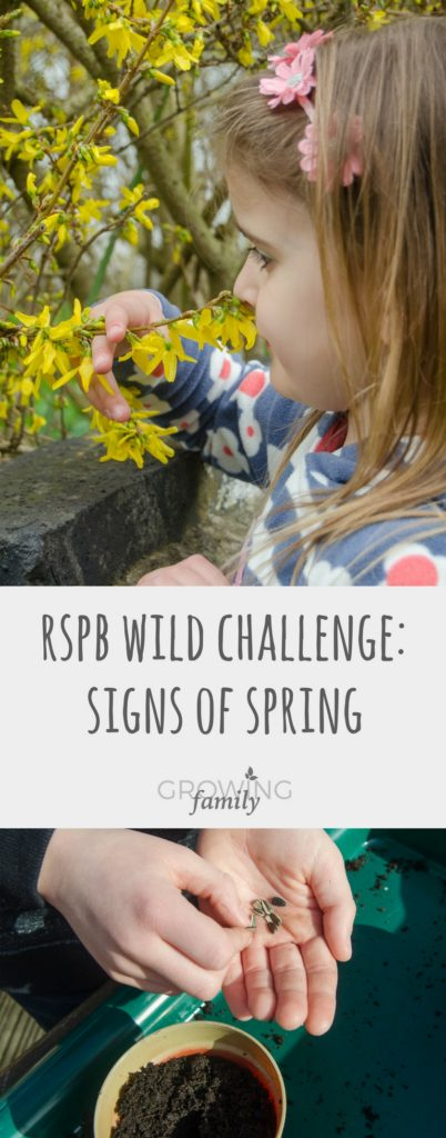 Looking for fun ways to explore nature in spring? Play Springo Bingo and plant Sunflowers - two easy, child-friendly activities from RSPB Wild Challenge.