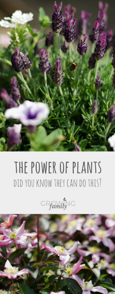 How many health benefits can you name that plants provide? Check out this infographic from Seranata flowers on the power of plants - you might be surprised!