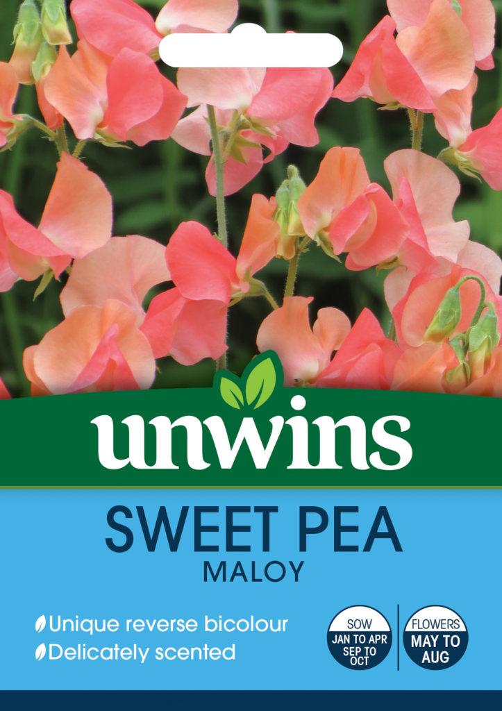 Unwins Sweet Pea Maloy