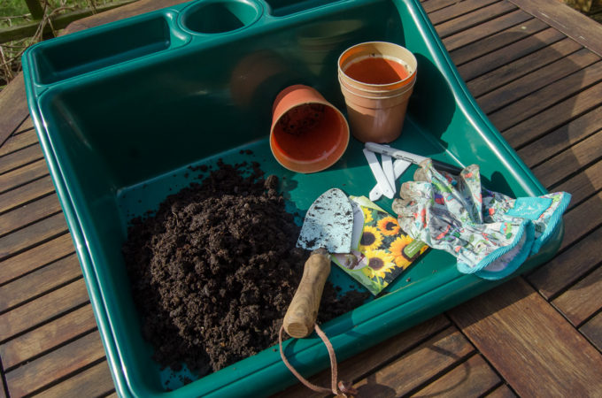 planting sunflowers - kit