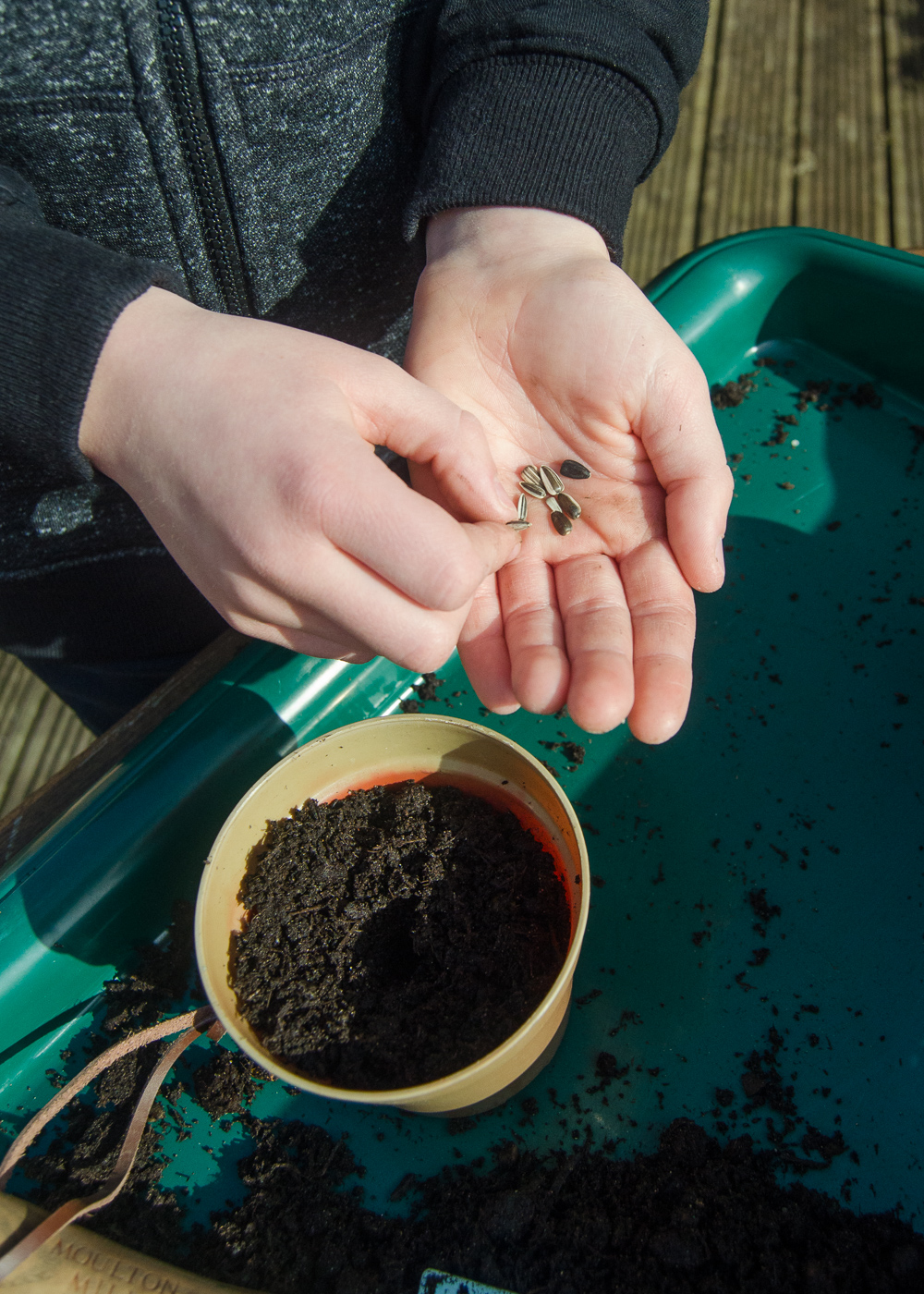 things to do in the garden when stuck at home with the kids - planting sunflowers