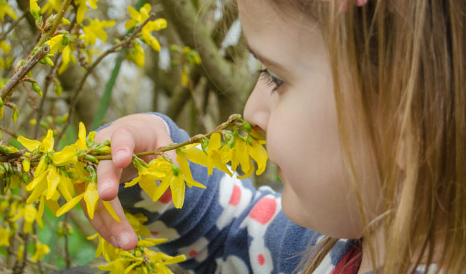 Taking the RSPB Wild Challenge: spotting signs of spring and sowing sunflowers